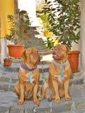 Cães na rua Foto de Stock