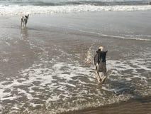 Cães no mar Imagens de Stock