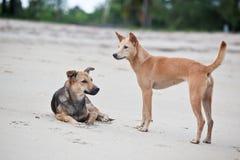 Cães no Sandy Beach, vacantion do verão Fotos de Stock Royalty Free