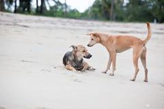 Cães no Sandy Beach, vacantion do verão Imagens de Stock