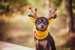 Cães no traje dos cervos, humor do outono, cervo fantástico fotografia de stock