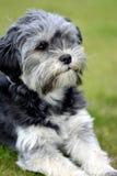 Cães novos do corte fotografia de stock