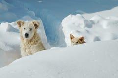 Cães o na neve Fotografia de Stock
