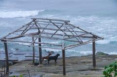 Cães pelo mar Fotografia de Stock Royalty Free