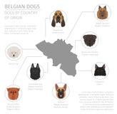 Cães pelo país de origem Raças do cão de Bélgica Templ de Infographic ilustração royalty free