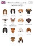 Cães pelo país de origem Raças inglesas do cão Templ de Infographic ilustração royalty free