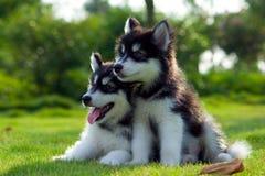 Cães pequenos fotografia de stock