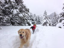 Cães que apreciam a neve Foto de Stock