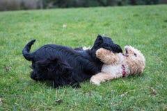 Cães que correm e que jogam Imagem de Stock Royalty Free