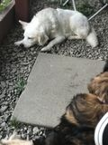 Cães que sentam-se para fora no sol Fotografia de Stock