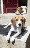 Cães relaxado imagens de stock royalty free