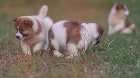 Cães Running Imagem de Stock