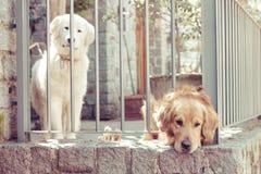 Cães sós fotografia de stock