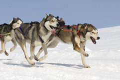 Cães Sportive na montanha Fotos de Stock Royalty Free