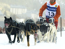 Cães, trenós e mushers em Pirena 2012 Imagens de Stock Royalty Free