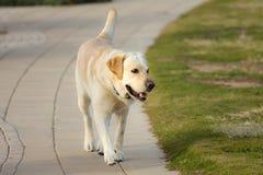 Cão 1 Imagens de Stock