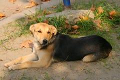 Cão 2 Foto de Stock Royalty Free