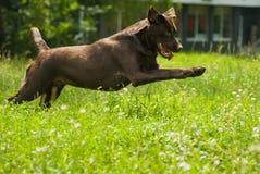 Cão Imagens de Stock
