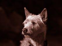 Cão Fotos de Stock Royalty Free
