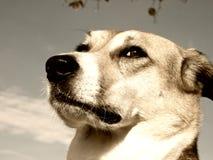 Cão (166) Fotografia de Stock Royalty Free