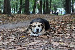 Cão Fotografia de Stock