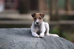 Cão Imagens de Stock Royalty Free