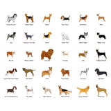 Cão Foto de Stock Royalty Free