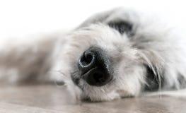 Cão Foto de Stock