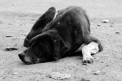 Cão Imagem de Stock
