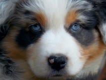 Cão! Fotografia de Stock Royalty Free