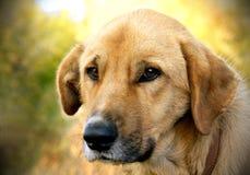 Cão Fotos de Stock
