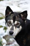 Cão abandonado Fotografia de Stock