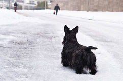 Cão abandonado Imagem de Stock