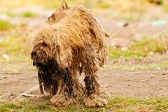 Cão abusado em Xochimilco, México imagem de stock