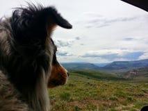 Cão aciganado que olha para fora como nós dirigimos da passagem enlameada foto de stock royalty free
