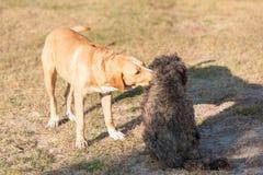 Cão adorável de Labrador no jardim imagem de stock royalty free