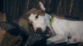 Cão adorável que come um osso filme
