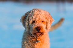 Cão agradável Foto de Stock