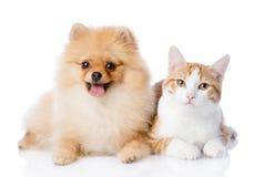 Cão alaranjado do gato e do spitz junto Imagem de Stock Royalty Free