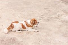Cão alegre Foto de Stock