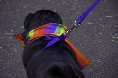 Cão alegre fotografia de stock