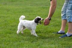 Cão alegre que joga com bola Imagens de Stock Royalty Free