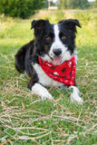 Cão alerta e esperando da exploração agrícola. Imagem de Stock