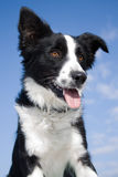 Cão alerta e feliz. Fotos de Stock Royalty Free
