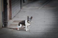 Cão amarrado imagem de stock