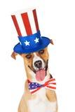 Cão americano do Dia da Independência Imagens de Stock Royalty Free