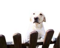 Cão amigável Foto de Stock Royalty Free