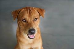 Cão amigável fotografia de stock royalty free