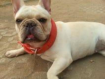 Cão, animal, animal de estimação Foto de Stock