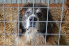 Cão animal em um cão velho da gaiola Foto de Stock